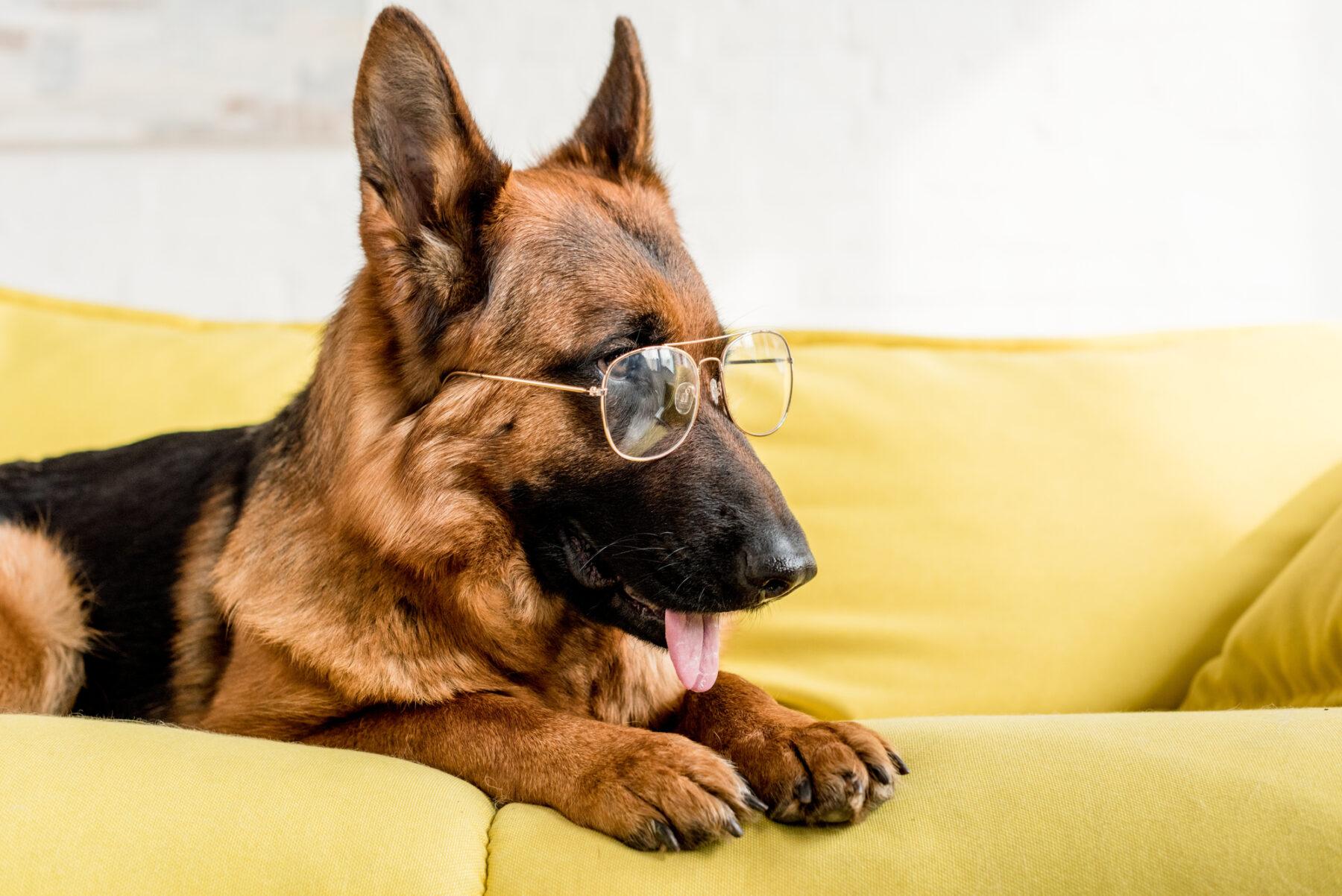 Mental exercises for German Shepherd