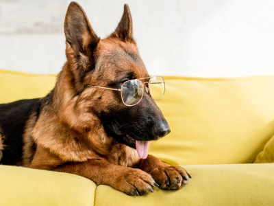 Mental Exercises For German Shepherd