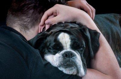 How To Teach A Dog To Hug