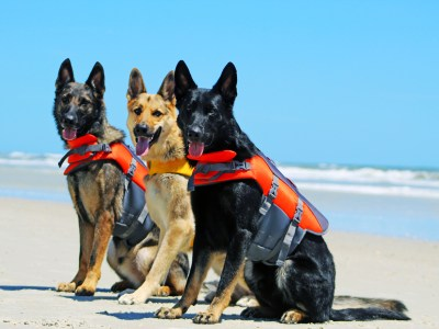Best Life Jackets For German Shepherds