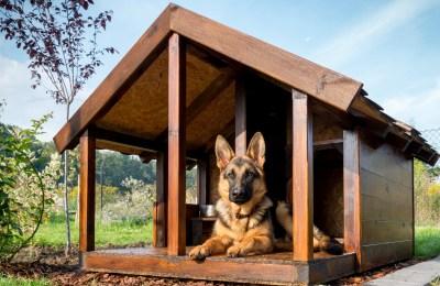 Can German Shepherds Live Outside?
