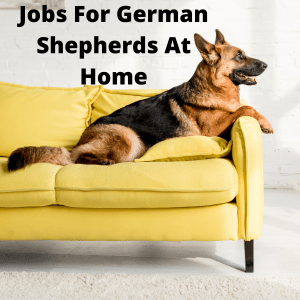 Jobs For German Shepherds At Home