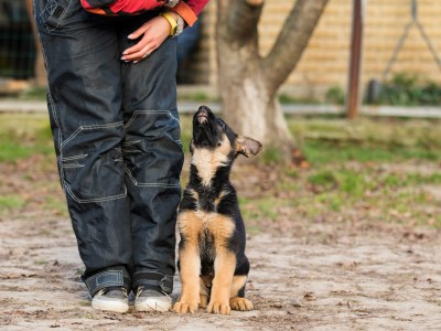 German Shepherd Training Commands