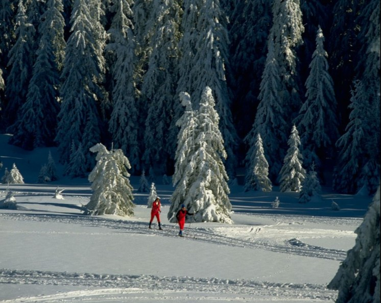 Black Forest cross country skiers