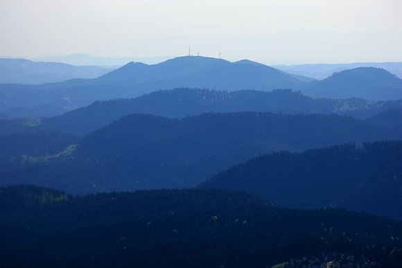 Black forest misty view