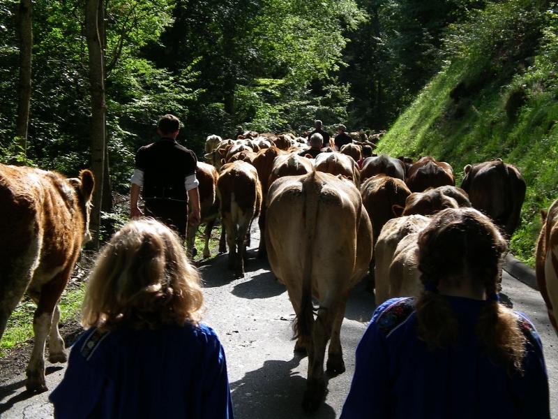 Kids as cowherds