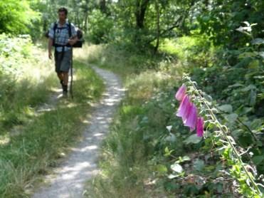 Walker on the Rheinsteig, the long distance path that follows the river.