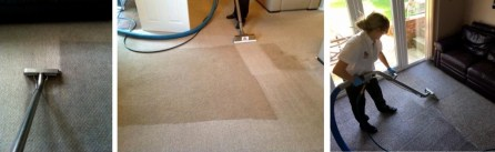 Professional Carpet Cleaning Since 1975