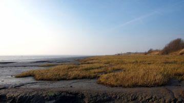 Coastal Reserve 17