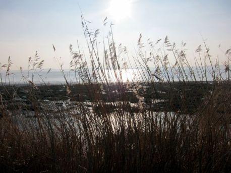 Coastal Reserve 5