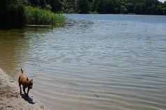Dog heaven: by the Grunewaldsee