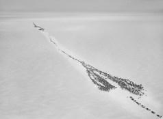 Genesis: Nenet reindeer herd Siberia