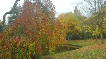 Autumn colour Sefton Park 2