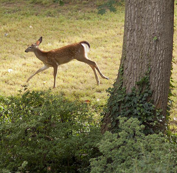 DC 9-10 Trip_0148-Deer