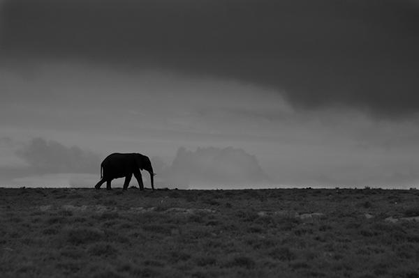 elephant-932220_960_720