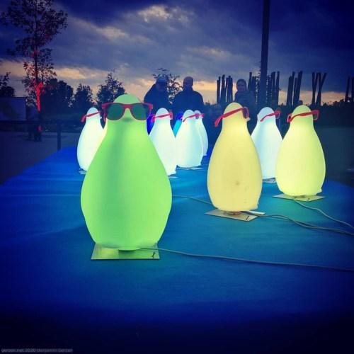 Penguins in sun glasses