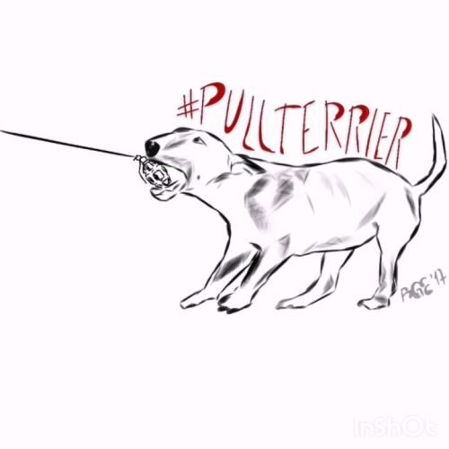Pullterrier