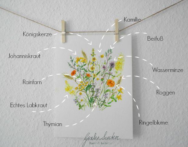 Kräuterbuschen Aquarell