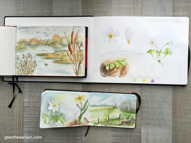 Naturskizzenbuch- Natur und Wildpflanzen in Aquarell