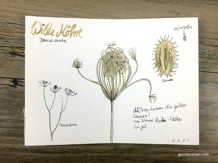 Naturskizzenbuch - Wilde Möhre