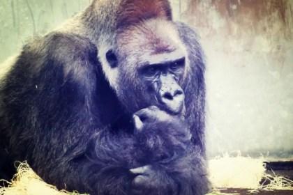 Von Tieren und Menschen. Was ist falsch am #Biologismus?