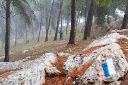 Fremde Bäume. Koloniale Umweltpolitik in Palästina/Israel