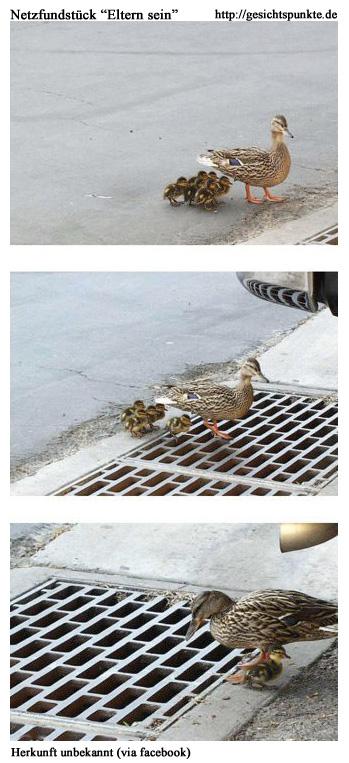 Entenmutter (Netzfundstück)