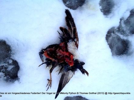 Dies ist ein hingeschiedenes Federtier! Der Vogel ist tot! #Monty Python