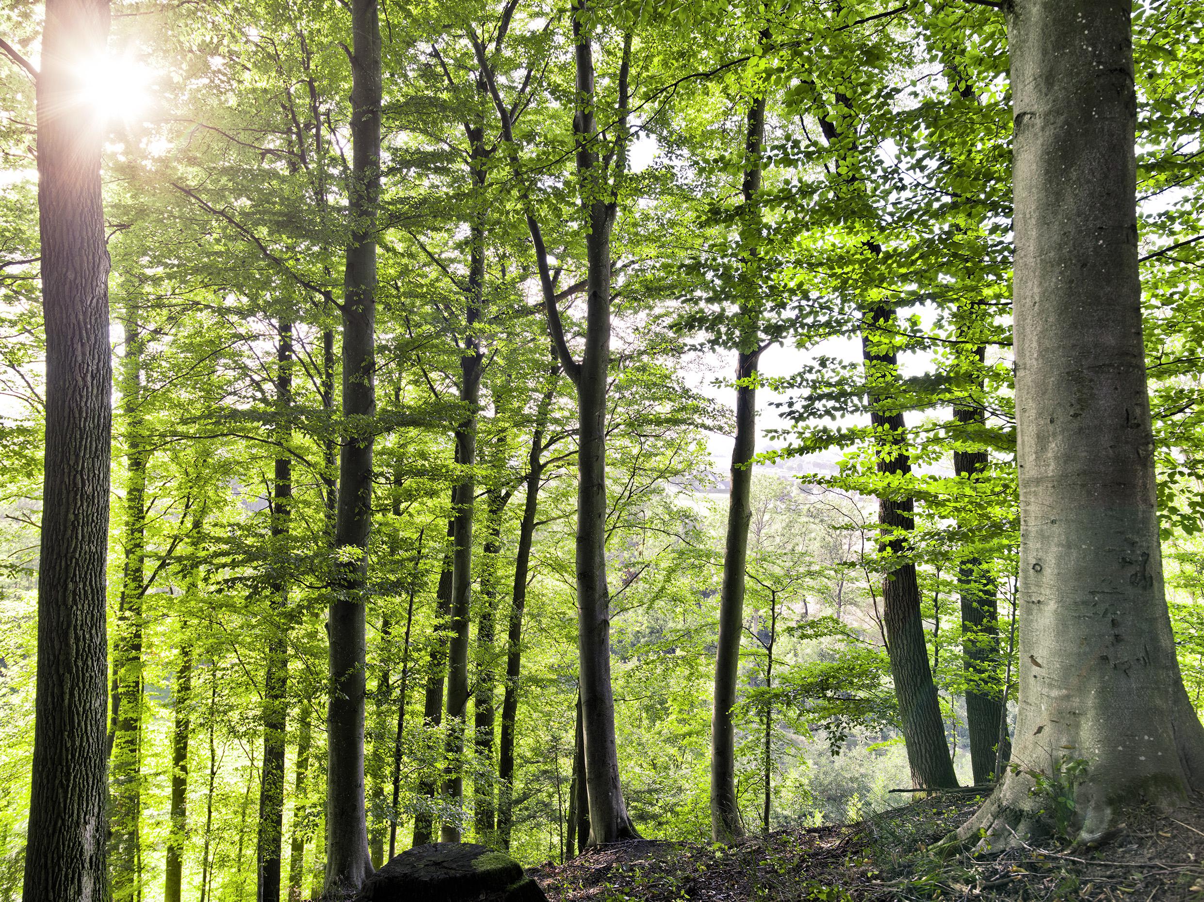 TEAM 7 und sein Wald: gelebte Nachhaltigkeit