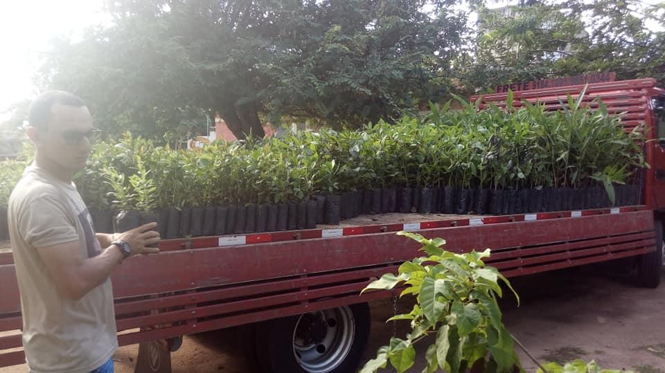 Cedams, AABB e Afink firmam parceria e destinam 2.060 mudas de ipê para projeto de reflorestamento em Sapé