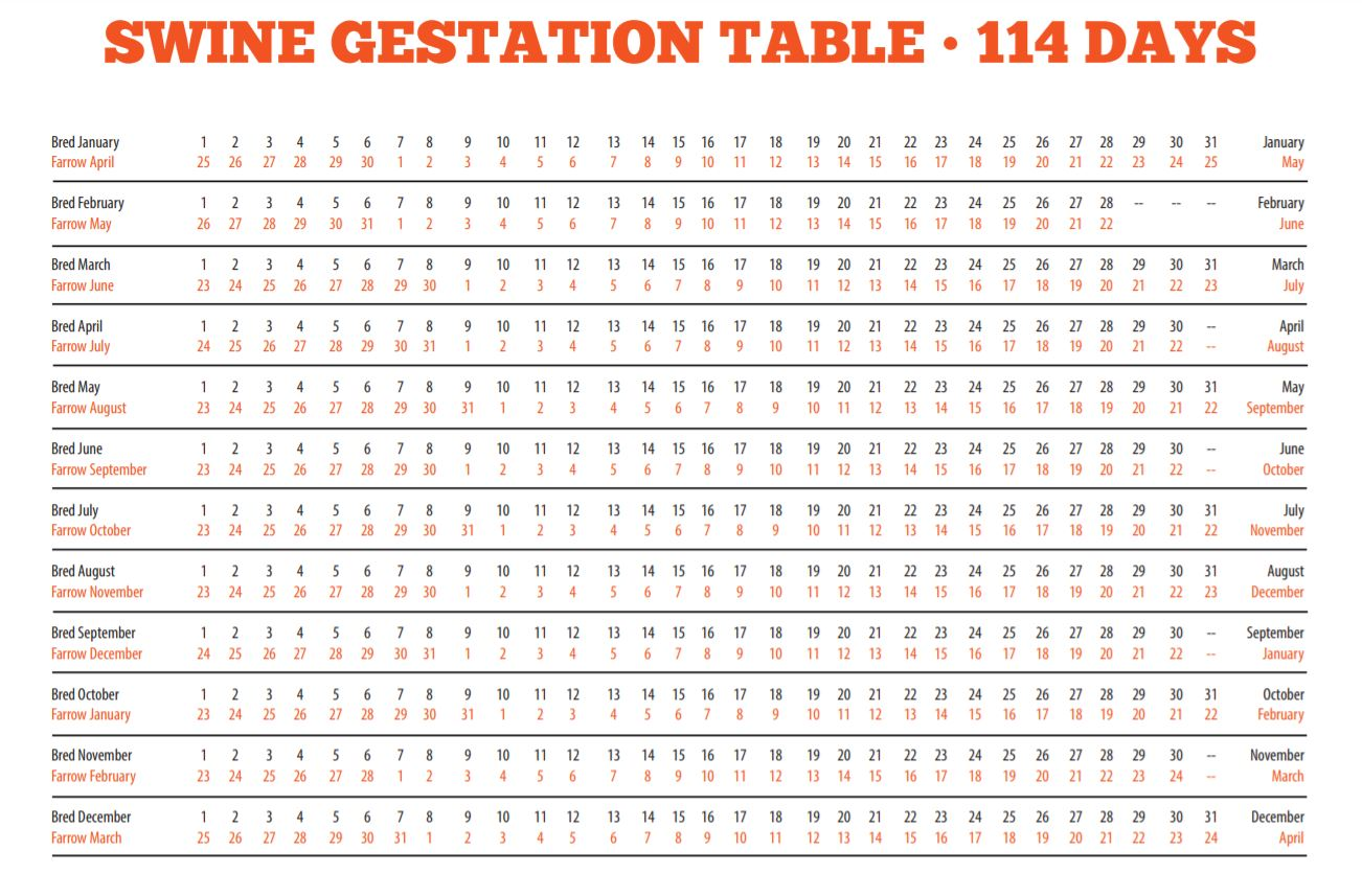 Dog Gestation Table