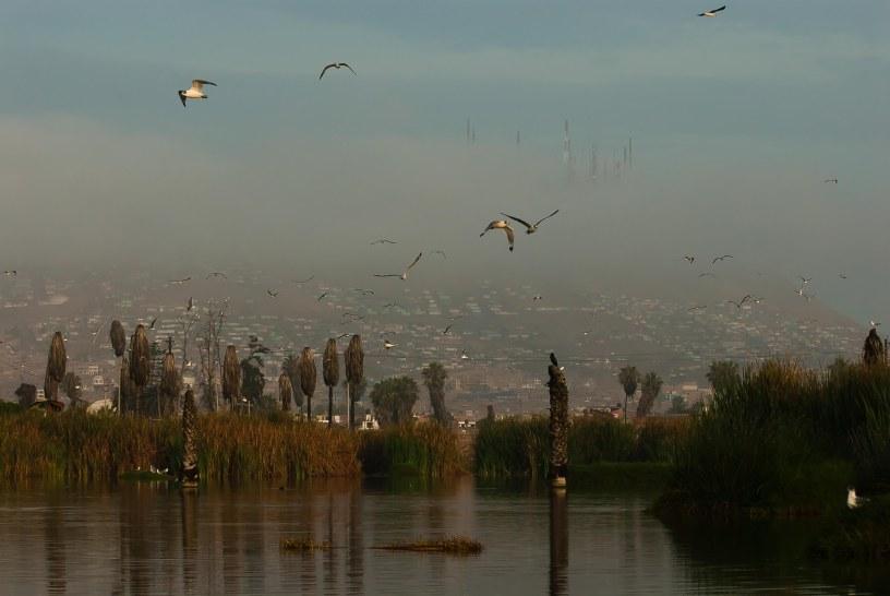 zona-reservada-los-pantanos-de-villa-7