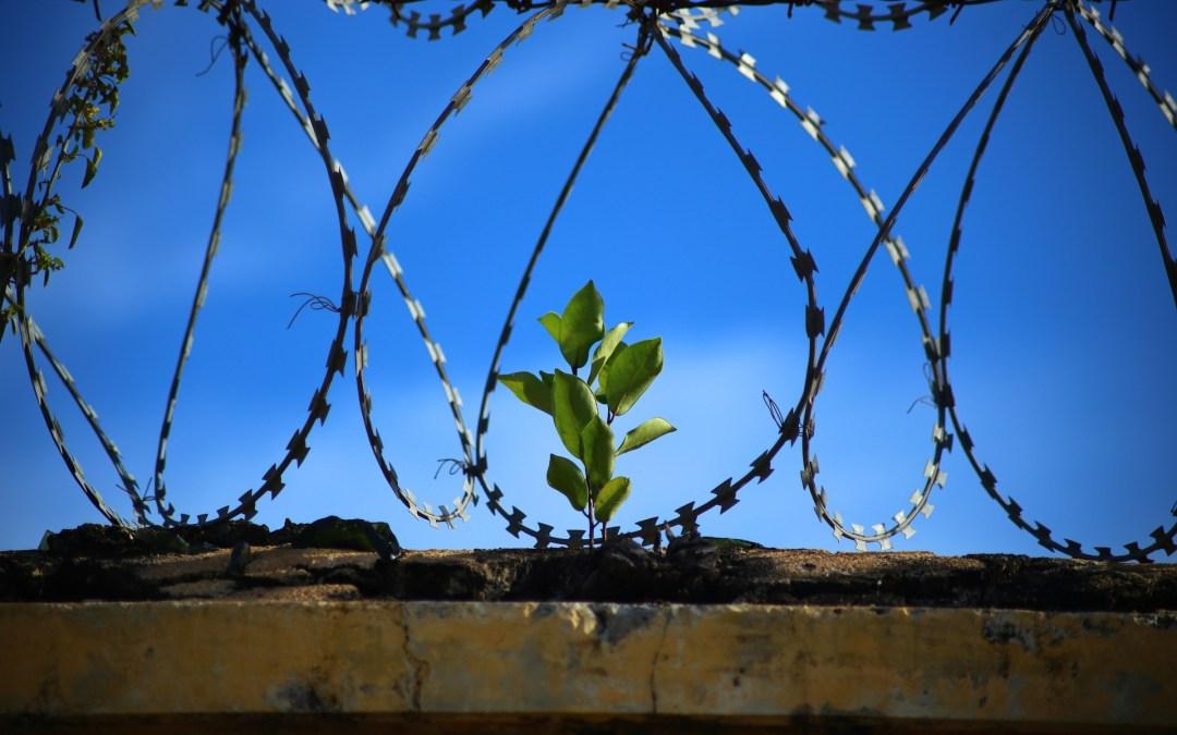 Presos Sanitarios – Libertad Terapias Alternativas
