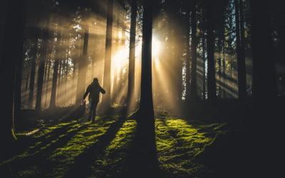 ¿Cómo acceder al Sentir cuando tienes Miedo?