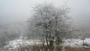 Winterbaum 1.17