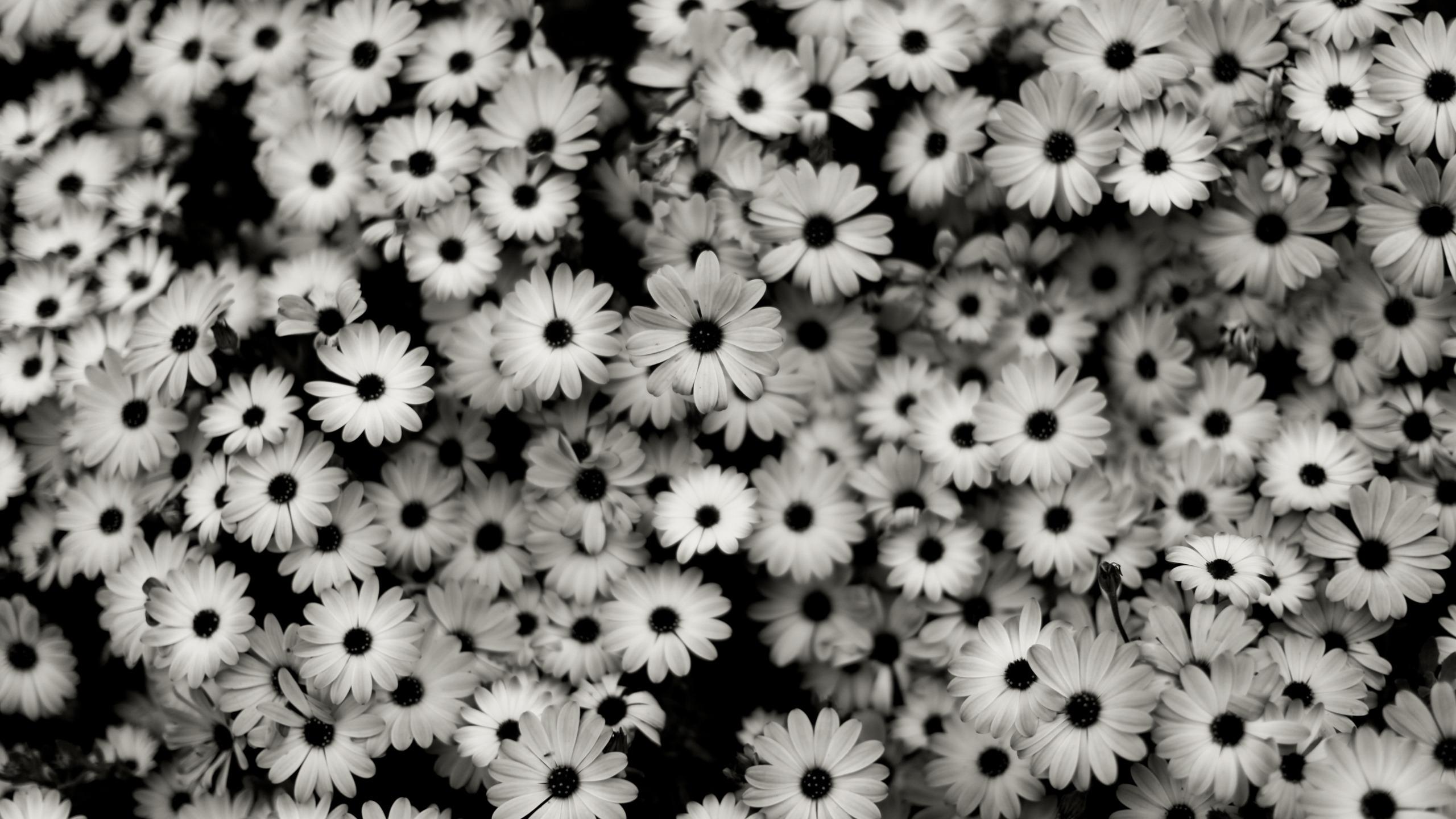 fond d ecran monochrome fleurs