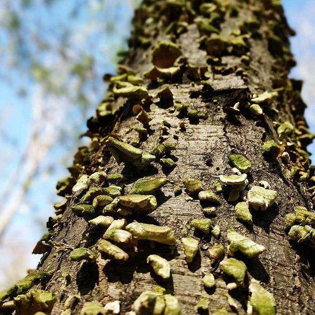 ur lichen this