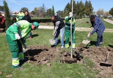 Plantación de árboles en Perales del Río