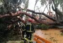 El viento causa estragos en Getafe