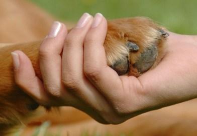 """""""El Gobierno municipal no tiene empatía hacia los animales"""""""