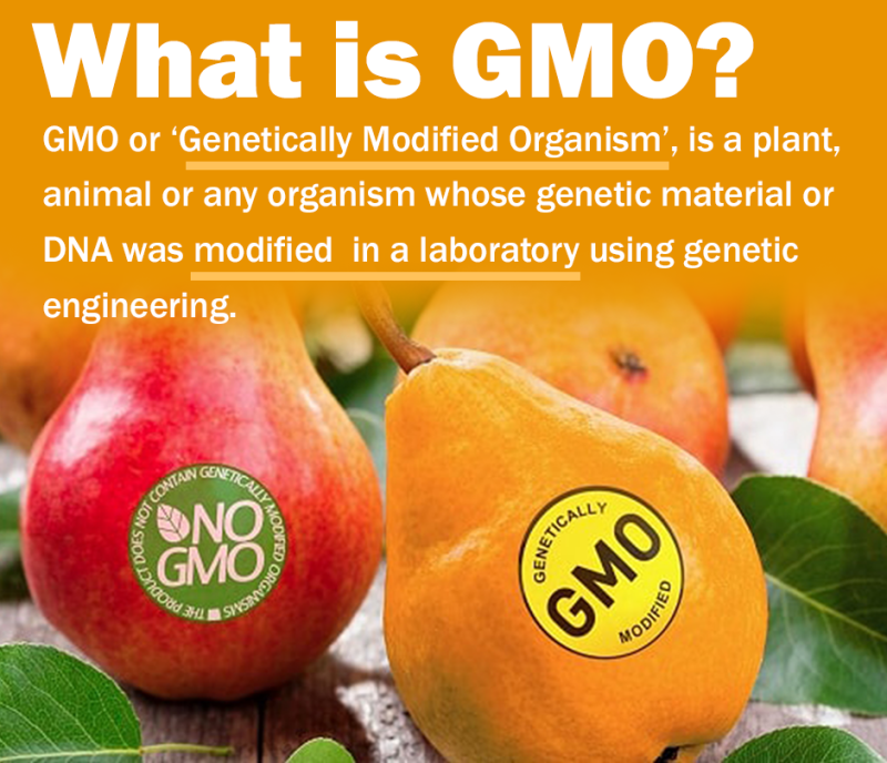 what-is-gmo