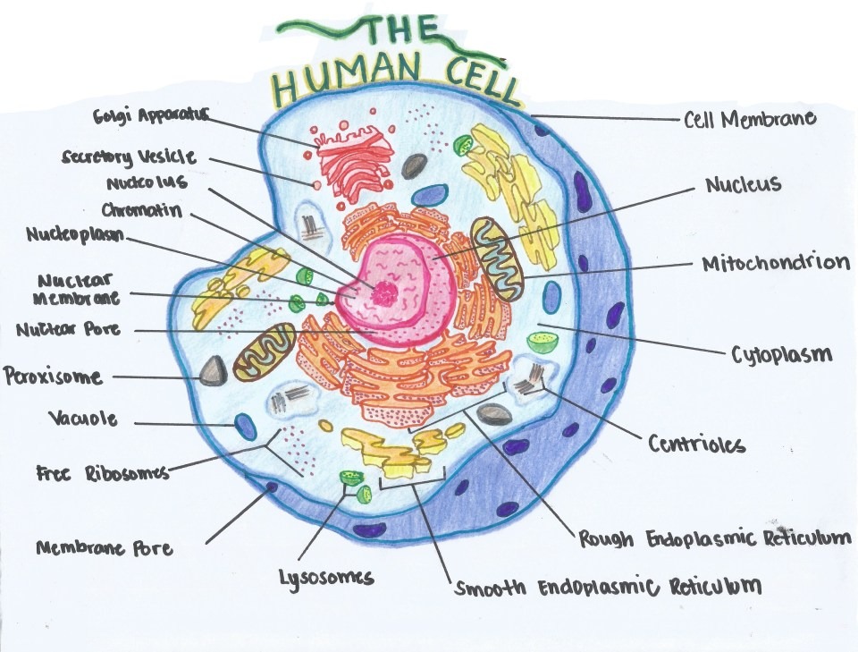 The Cell_Jacalan