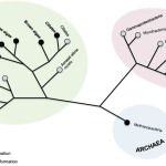 multicellularity-across-the-tree-of-life-2