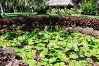 07-Tokoriki Island Resort Fiji 2-1-2011 4-14-05 PM