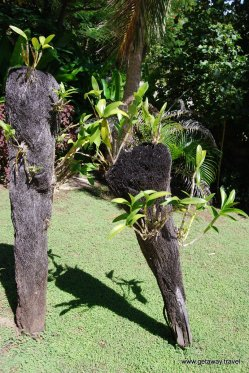 21-Tokoriki Island Resort Fiji 2-1-2011 4-36-06 PM