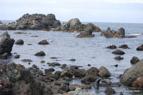 11-Cape Palliser New Zealand 2-9-2011 12-41-39 PM