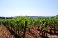 08-Burgundy France Wine Tour 7-27-2013 9-38-27 AM