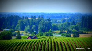 winery oregon (2)