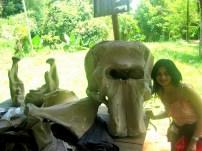 srilanka elephant