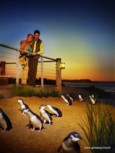 3-Penguin Parade Viewing 1